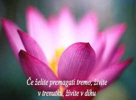 5. sprostitev 2-citat